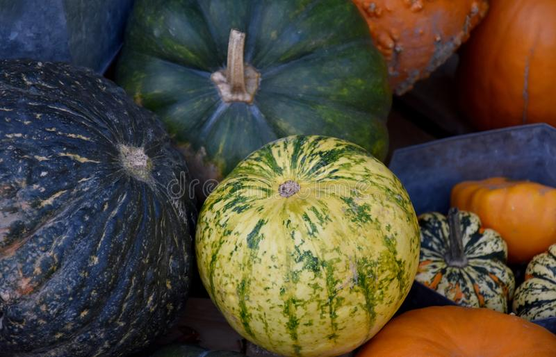 Different kinds of pumpkins stock images royalty free stock images