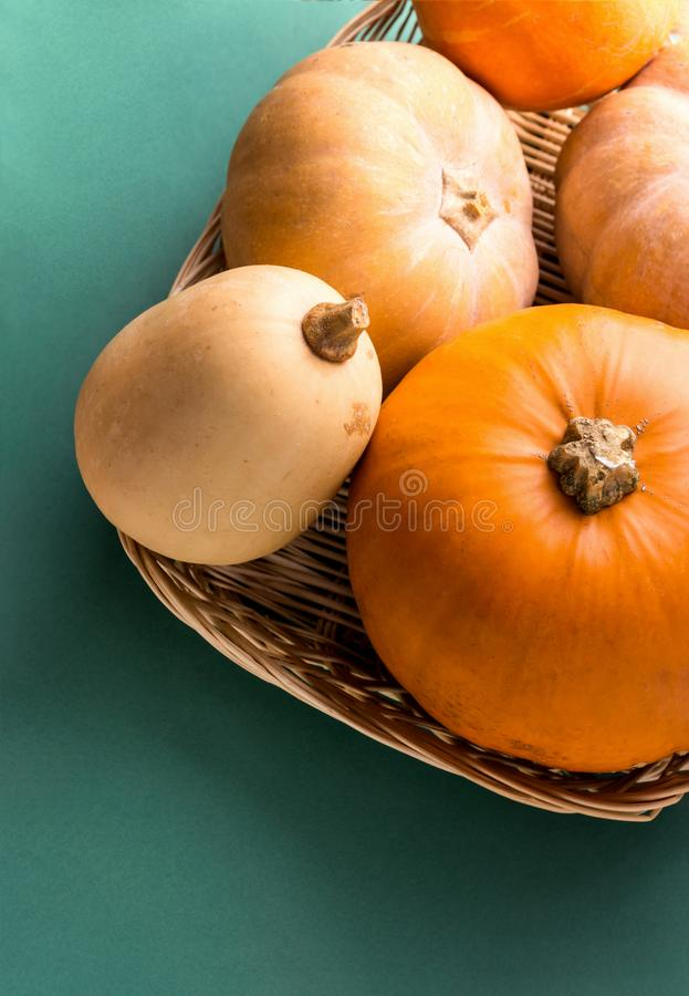 Different kinds of pumpkins in wicker basket colorful on dark green background. Thanksgiving fall harvest abundance concept royalty free stock photography