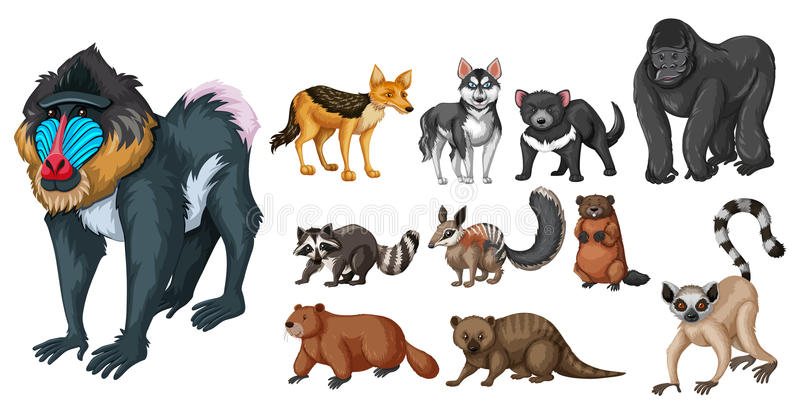 Different kinds of wild animals vector illustration