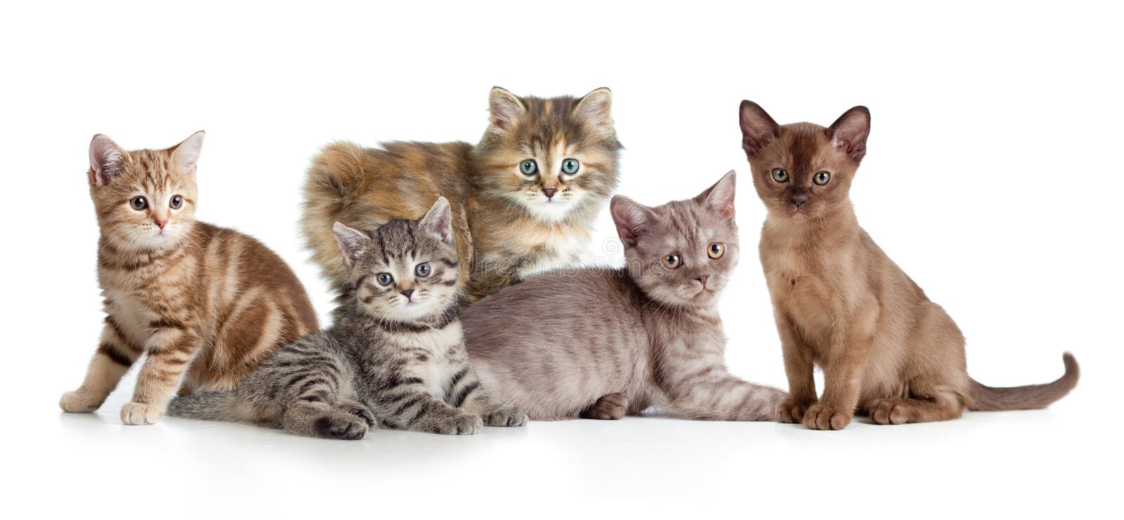 Different kitten or cats group royalty free stock images