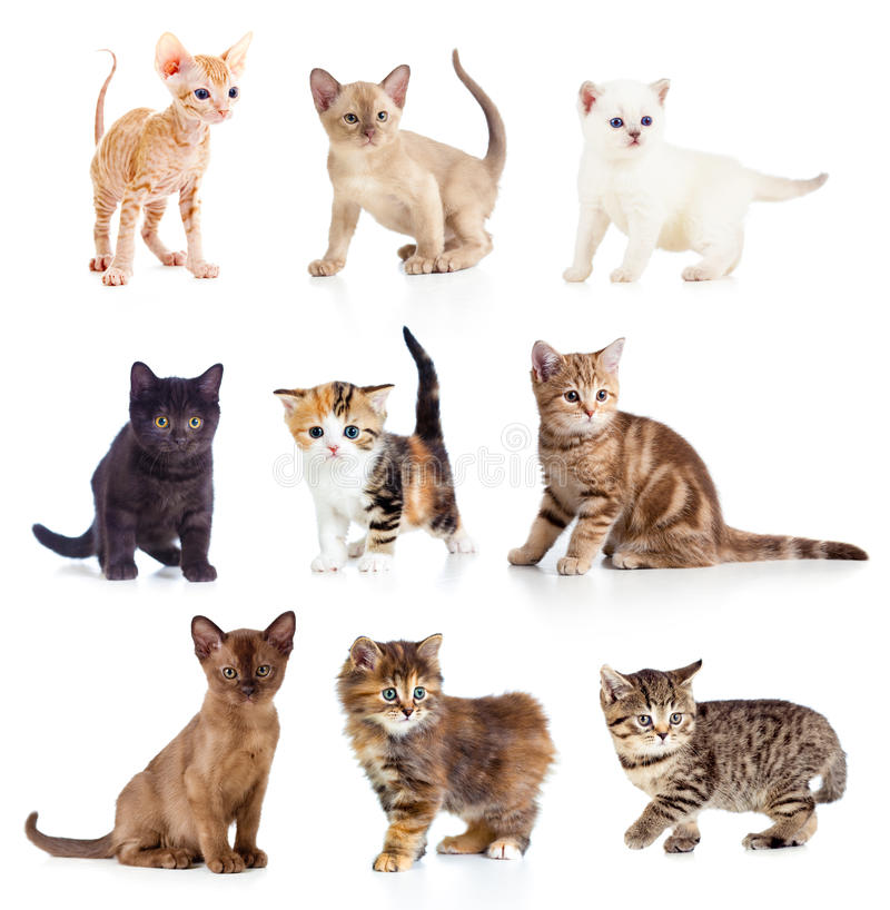 Different kittens collection royalty free stock image