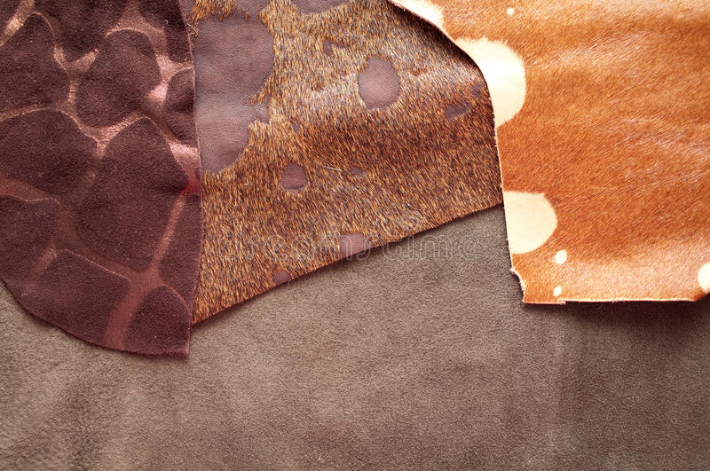 Different Leather Samples Royalty Free Stock Photography