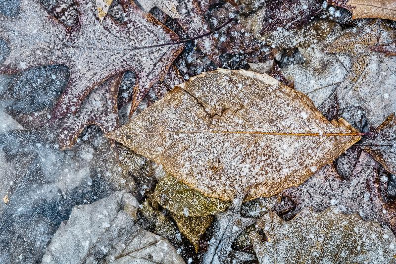 Different Leaves in ice stock photography