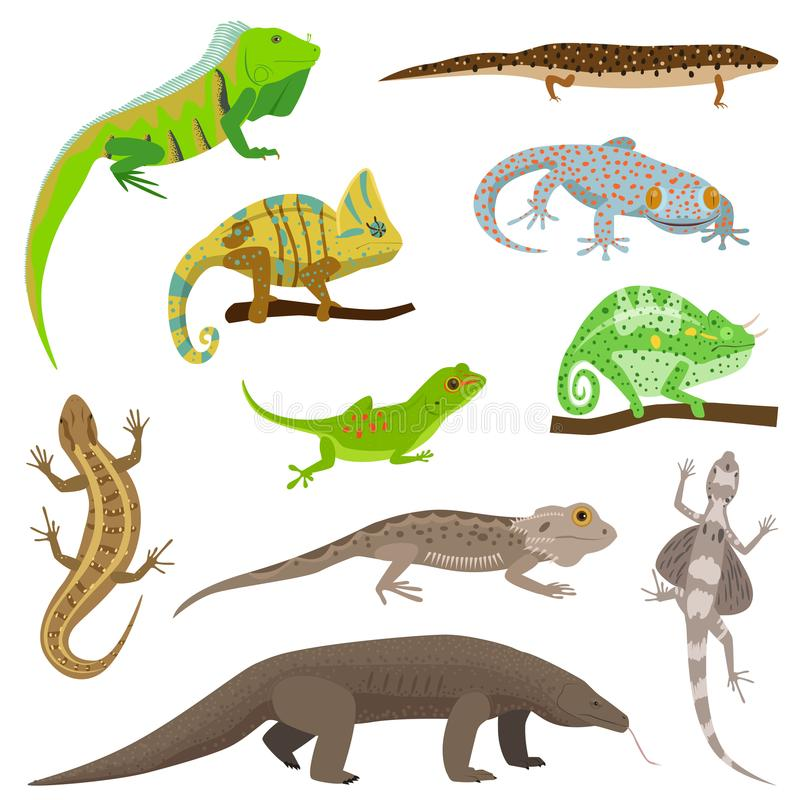 Different lizard reptile animals on white vector illustration. Reptile hand drawing wild monster character vector illustration