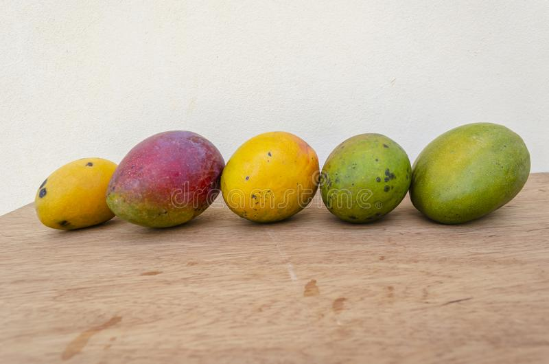 Different Mangoes In A Line royalty free stock images