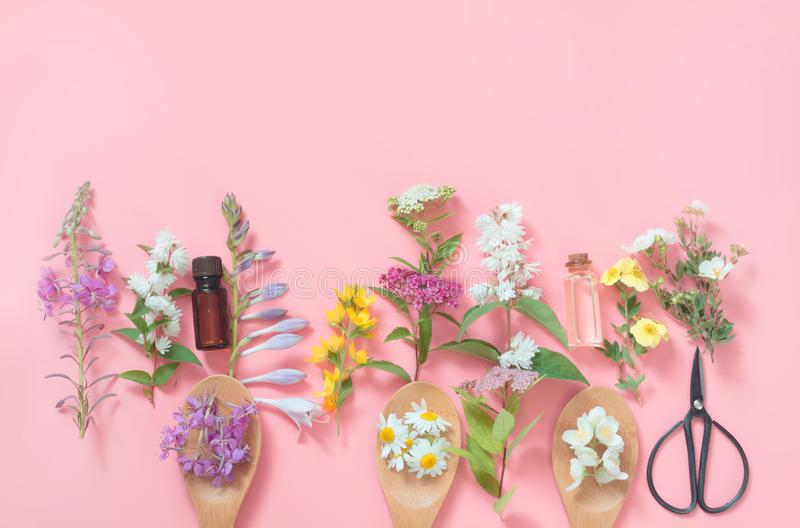 Different meadow wild flowers on pink background. Floral composition with copy space. View from above. Spa concept. Different meadow wild flowers on a pink stock image