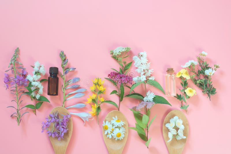 Different meadow wild flowers on pink background. Floral composition with copy space. View from above. Spa concept. Different meadow wild flowers on a pink royalty free stock photo