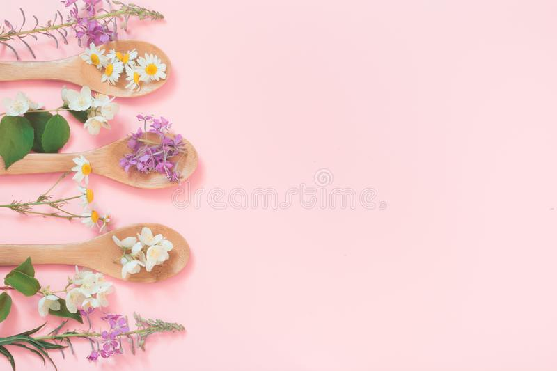 Different meadow wild flowers on pink background. Floral composition with copy space. View from above. Spa concept. Different meadow wild flowers on a pink stock photo