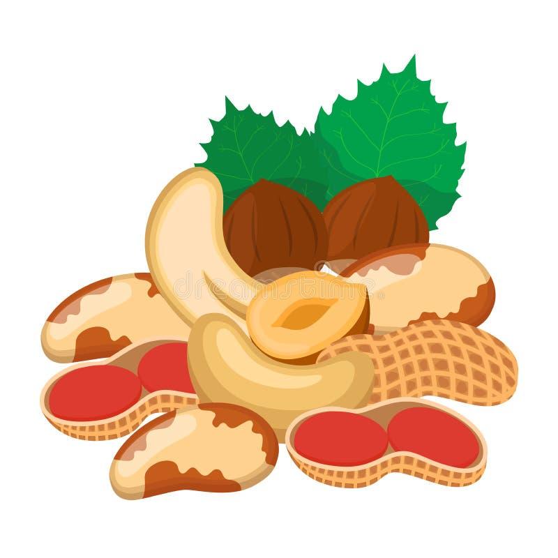 Different nuts set. Snack mix - peanut, brazil nut, cashew, hazelnut. Carton flat style royalty free illustration