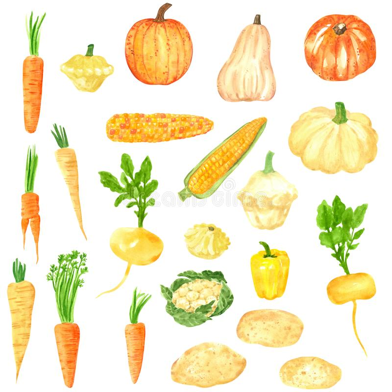 Different orange-yellow vegetables clipart set, , hand drawn watercolor illustration isolated on white. Halloween symbol royalty free illustration