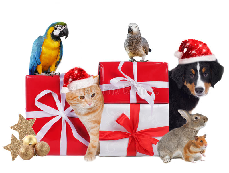 Different pets with christmas parcels. Isolated stock image