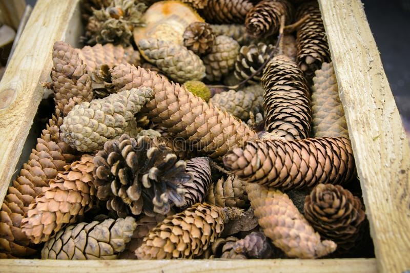 Different pine fir tree cones in vintage wooden garden box at Christmas market. Natural decoration materials for holiday crafts royalty free stock photos