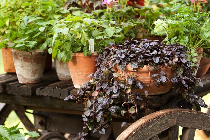 Different plants and flowers in ceramic pots stand on a cart stock images