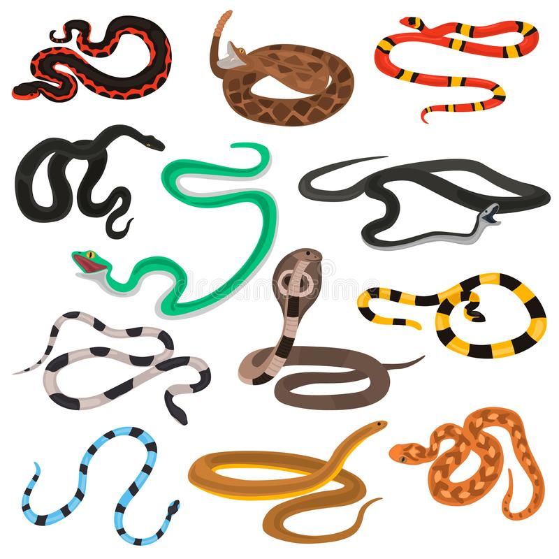 Different poison snakes color flat icons set. For web and mobile design royalty free illustration