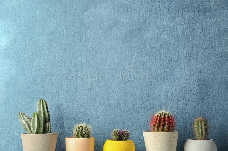 Different potted cacti near color wall, space for text. Interior decor stock photos