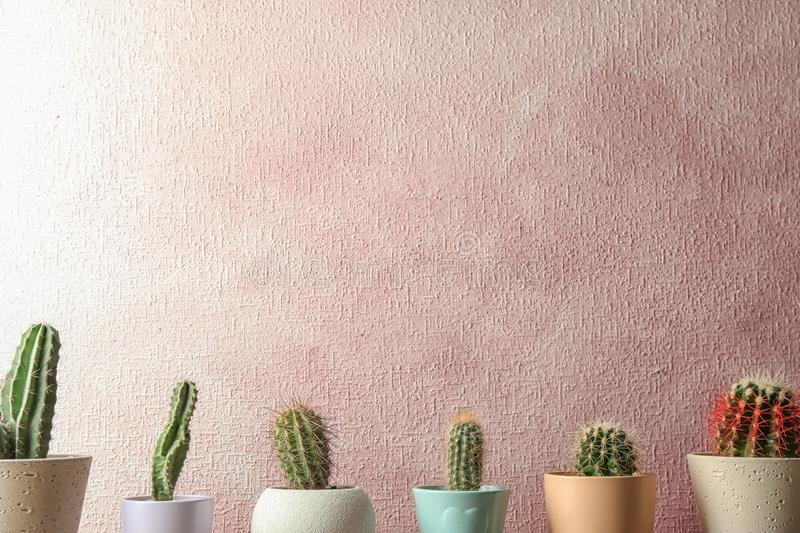 Different potted cacti near color wall. Interior decor. Different potted cacti near color wall, space for text. Interior decor royalty free stock photos