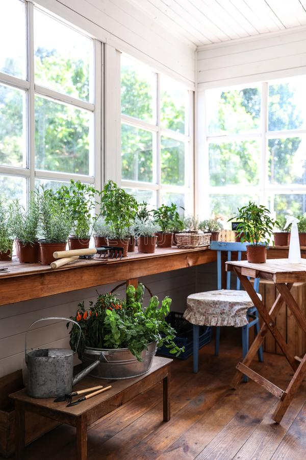 Different potted home plants and gardening tools royalty free stock photos