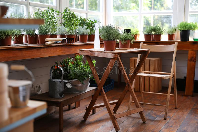 Different potted home plants and gardening tools royalty free stock image