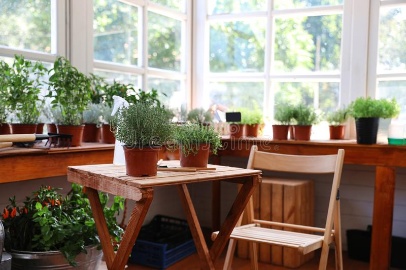 Different potted home plants and gardening tools stock image