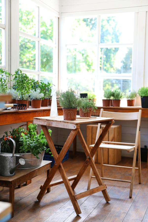 Different potted home plants and gardening tools royalty free stock images