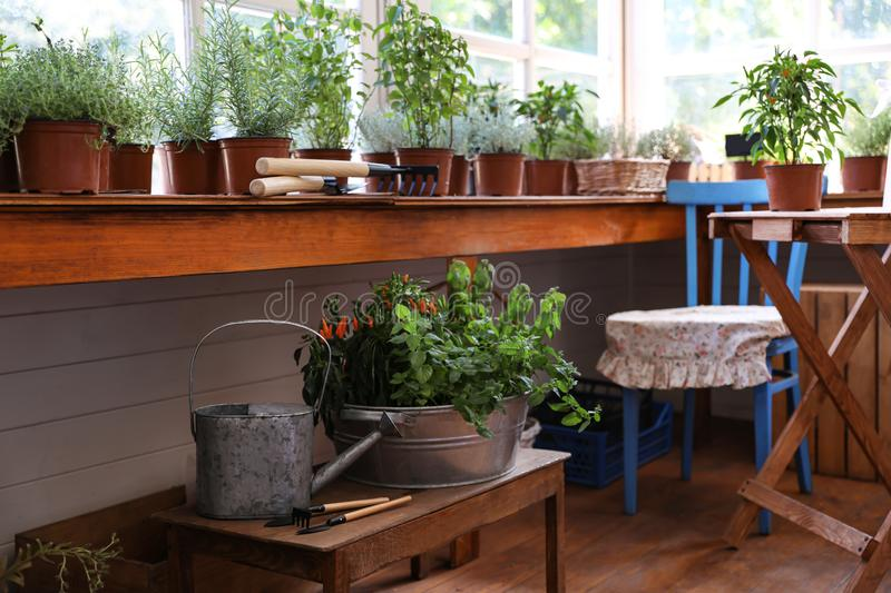 Different potted home plants and gardening tools stock photography