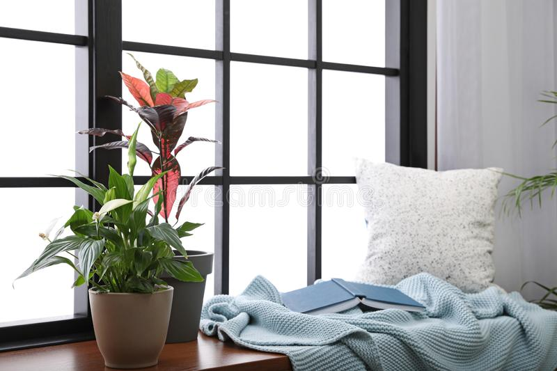 Different potted plants, blanket, book and pillow on window sill stock image