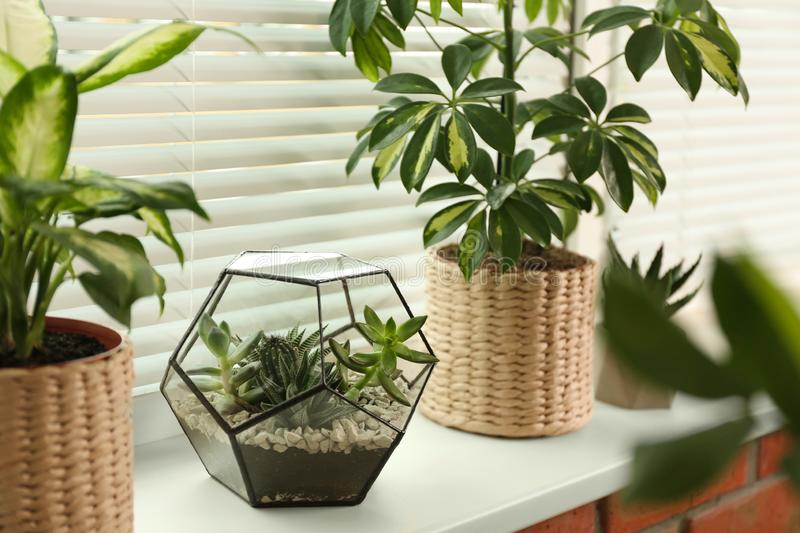 Different potted plants on sill near window blinds stock photography