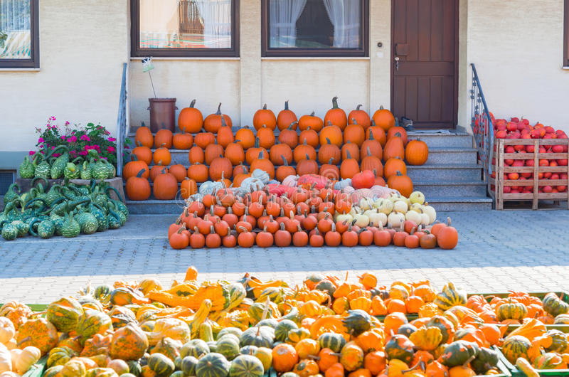 Different pumpkins and pumpkin squashes offered for a sale royalty free stock photos