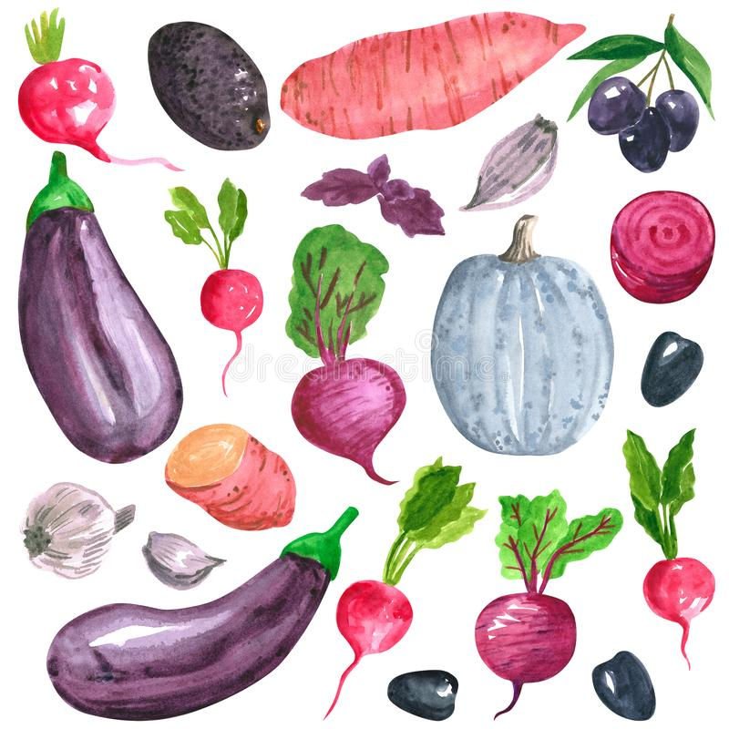 Different purple, pink, blue vegetables clipart set, sweet potato, eggplant, radish, beetroot, hand drawn watercolor illustration. Isolated on white. Halloween royalty free illustration