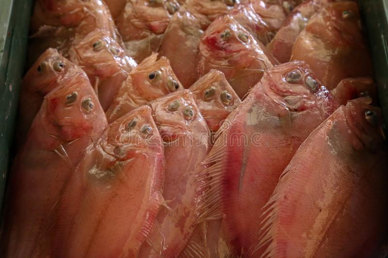 Different sea fish. At a fish market in Croatia stock images