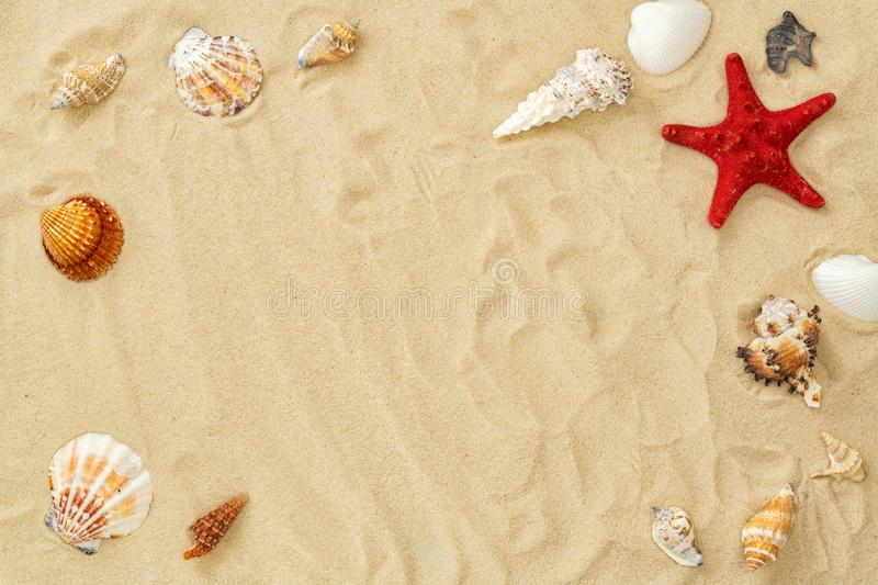 Different seashells frame on beach sand. Summer concept with seashells and starfish on beach sandy background. Design royalty free stock image