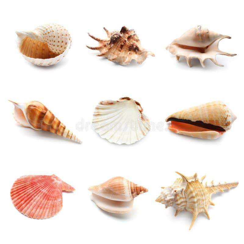 Free Different Seashells On White Background Royalty Free Stock Photo - 131953395