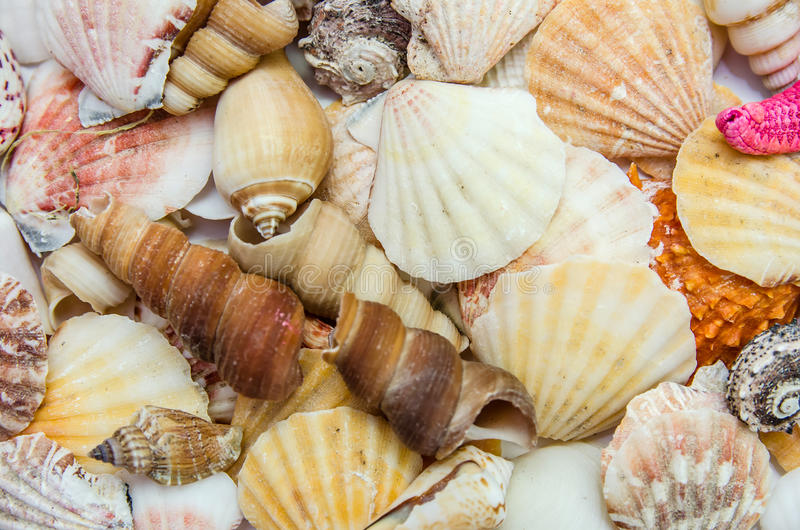 Different seashells and scallops. Lots of different seashells and scallops as background royalty free stock image