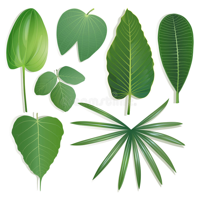Free Different Shape Of Leaves Set 2 Royalty Free Stock Photo - 57235535
