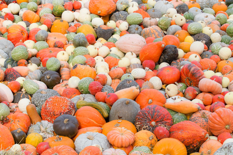 Different size and color pumpkins. On the ground stock photography