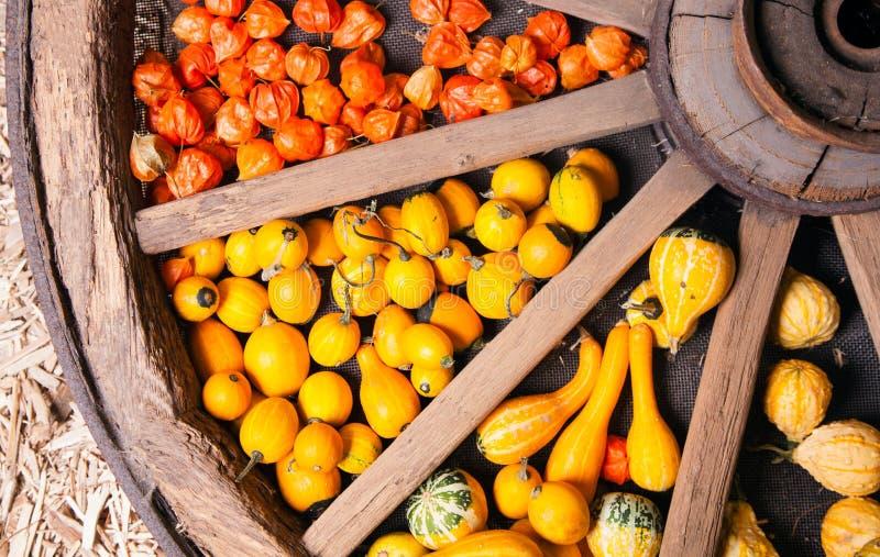 Download Different Sorts Of Decorative Pumpkins Stock Image - Image of botany, cucurbita: 25306463