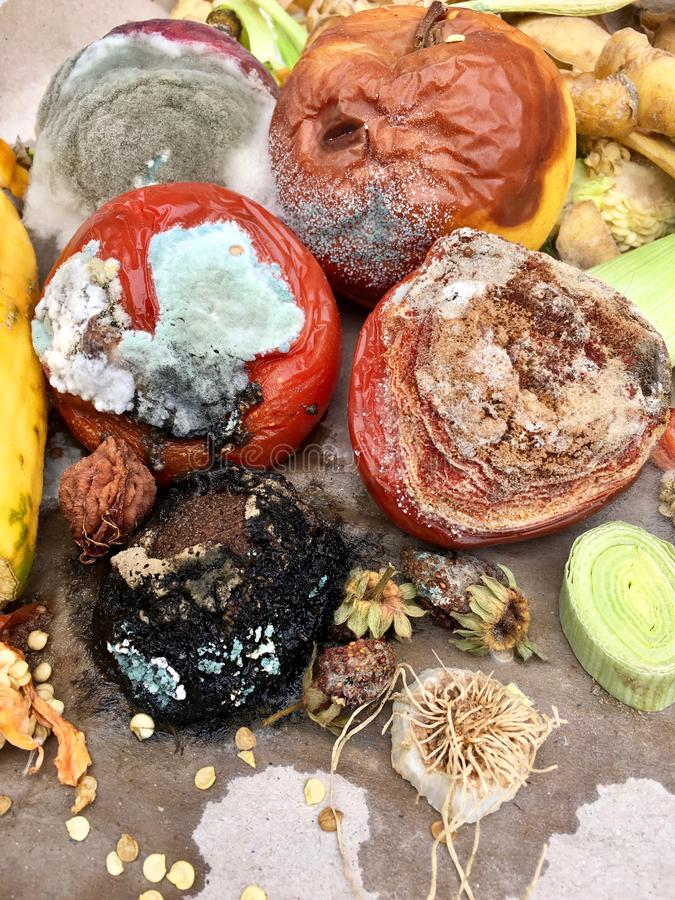 Free Different Sorts Of Rotten Fruits And Vegetables On Gray Paper I Stock Image - 102338471