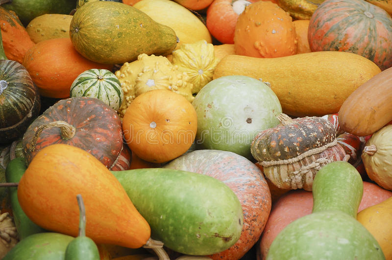Different species of pumpkins. Different styles and species of pumpkins with multiple colors stock image