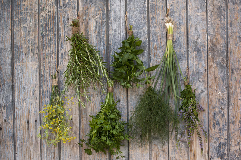 Download Different spices stock photo. Image of herb, packthread - 26555376