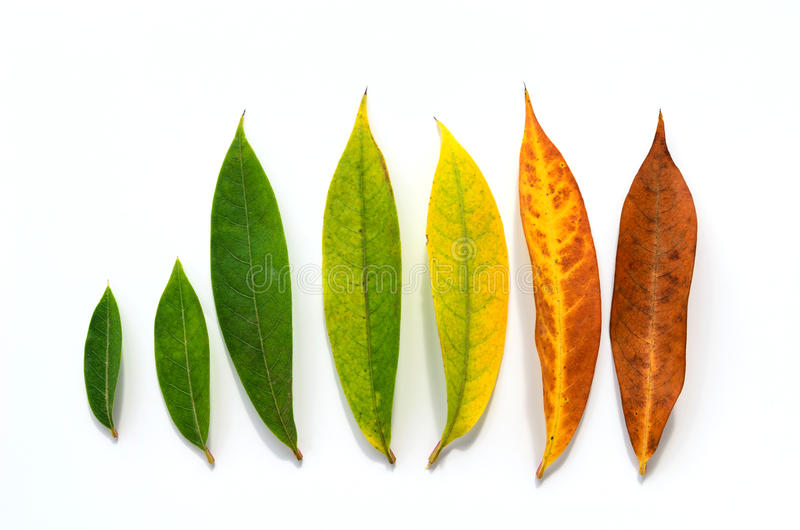 Different stages of life - Birth to death. Concept of growth leaf stock photos