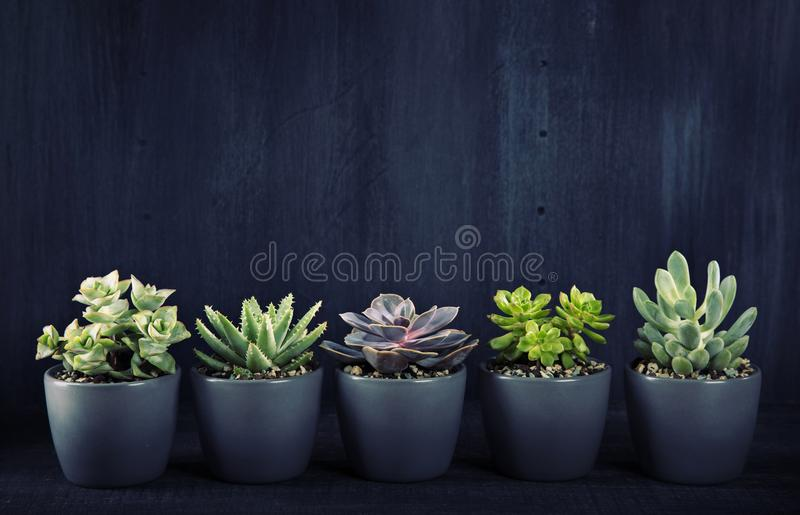 Different succulents above the black backgriund stock images