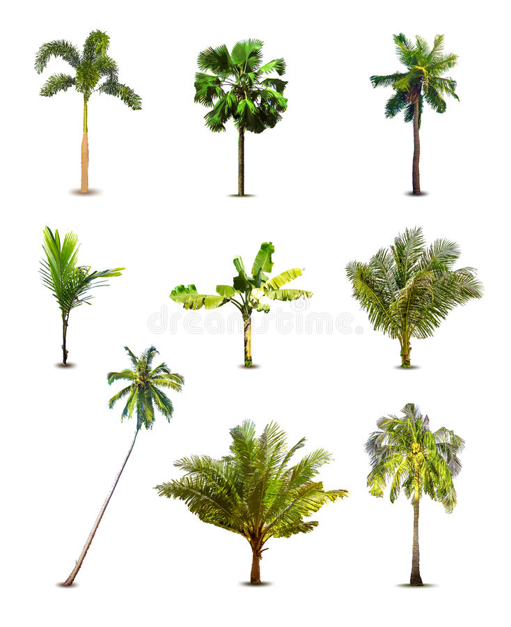 Different tropical palm trees. Vector stock illustration