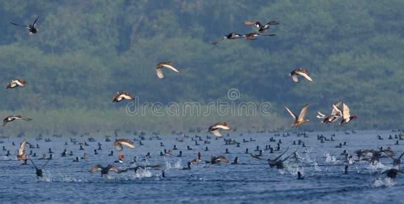Different type bird, nature, natural royalty free stock photos
