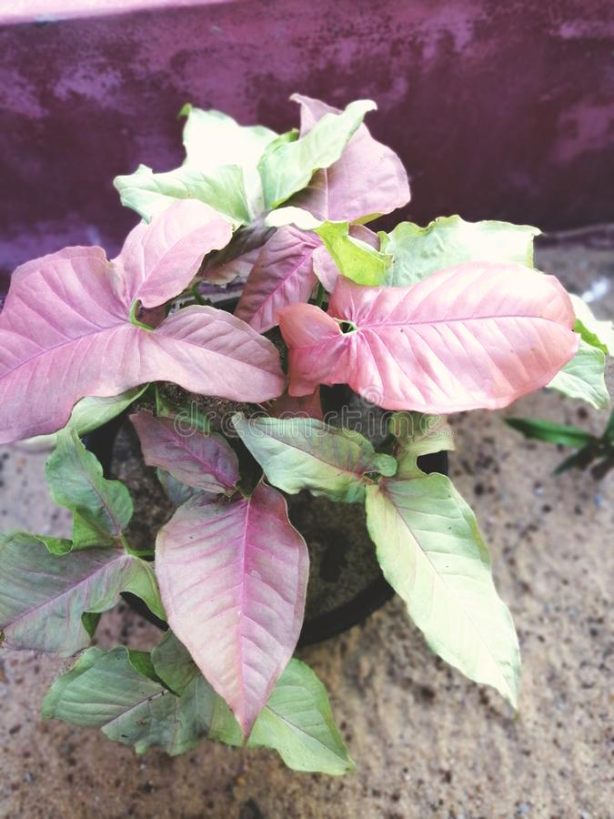 Different type of croton plant royalty free stock photography