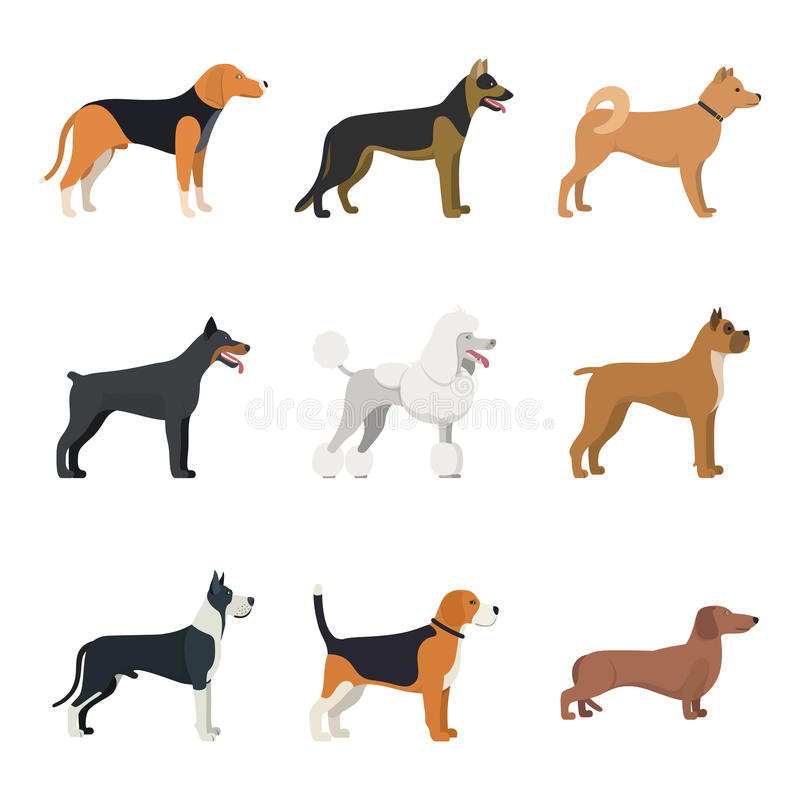 Different type of dogs breed set. With Beagle, German shepherd, Akita Inu, Doberman, Poodle, Boxer, Great Dane and Dachshund. isolated vector set vector illustration
