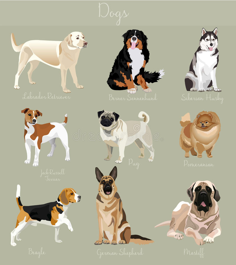 Different type of dogs set . Big and small animals. stock illustration