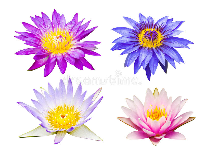 Different type of lotus flowers stock photo image of pink download different type of lotus flowers stock photo image of pink tropical 48205786 mightylinksfo