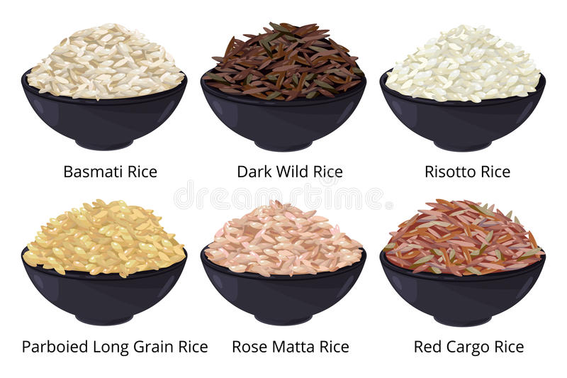 Different type of rice. Long grain, brown, white and other. Vector illustrations in cartoon style royalty free illustration