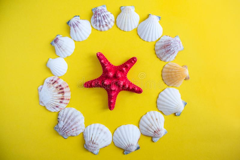 A different type of seashell on yellow background stock images