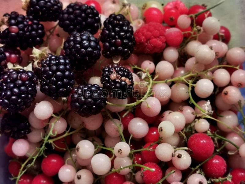 Different types of berries in a bowl. Bunch of fruits stock images